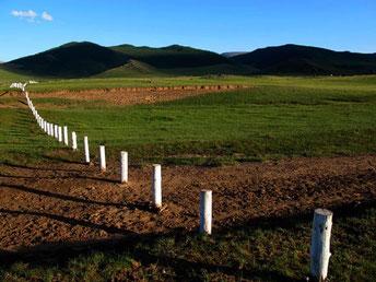 die Weiden geschützt durch weisse Pflöcke