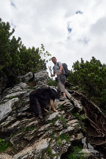 Wandern mit dem Hund auf die Hörndlwand
