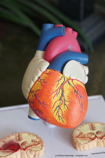 Vitamin K ist wichtig für Deinen Herz-Kreislauf. Es beugt zum Beispiel einer Arterienverkalkung vor.