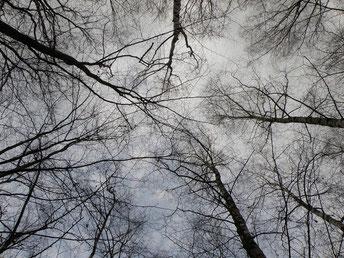 Stage sur l'énergie des arbres