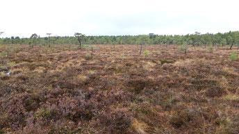 Hochmoor-dieses Gebiet wird zuerst vom Klimawandel betroffen sein