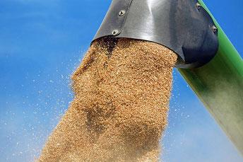 Mähdrescher Getreide
