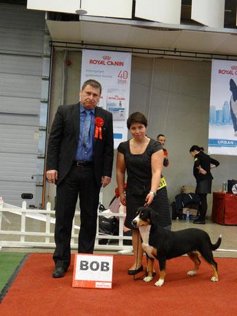 int Show in Lithuania 21.12.14  Karamel iz Blagorodnogo Doma - CAC CACIB BOB