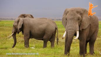 Den Elefanten dieser Erde ist der heutige Freudensprung der Woche gewidmet