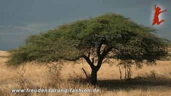 """Das afrikanische Projekt """"Great Green Wall"""" ist unser Freudensprung dieser Woche"""