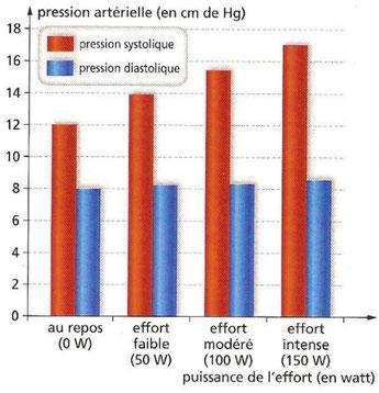 Evolution de la pression artérielle lors d'un effort. Source : HAchette SVT 2010 p208.
