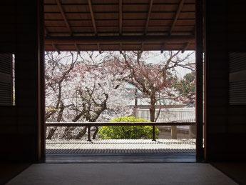 洋館内の枝垂れ桜