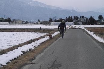 てつの散歩!!しゅうちゃん追いつかず!!