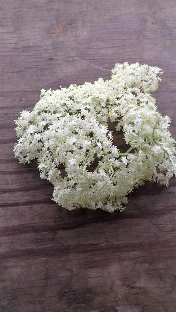 エルダーフラワーの花の通販@すどう農園