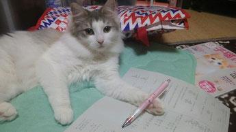 ヴィヴィちゃんお勉強がんばってね♪「ニャワワ~ン!」