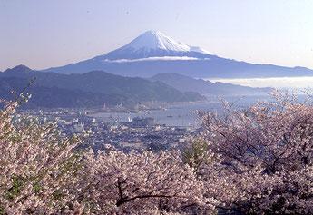 日本平からの富士山と桜