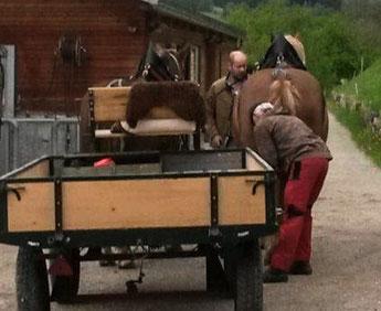 Thomas Mayer beim Anspannen der Pferde auf dem Ross-Hof
