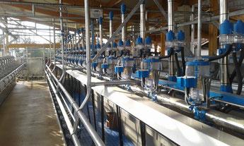 SwingOver Melkstand mit Milchmengenmessung und 2. Milchleitung