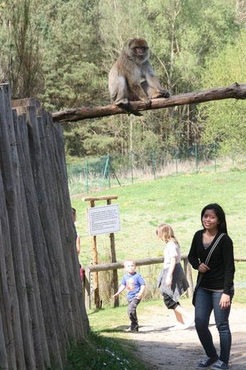 Im Affenwald Malchow