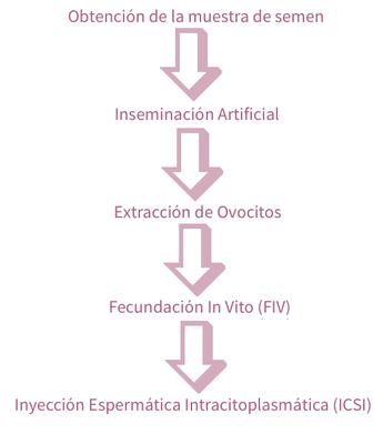 Técnicas Reproducción Asistida