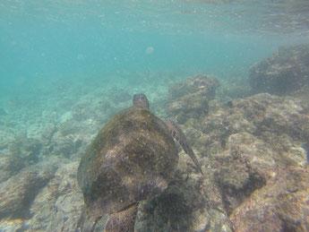 Nager avec la tortue est un grand souvenir pour Noémie !