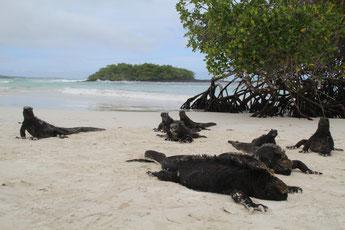 Rencontre avec les habitants de Tortuga Bay