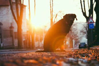 nutrition canine du chien