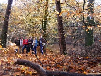 Herbstwald in voller Pracht