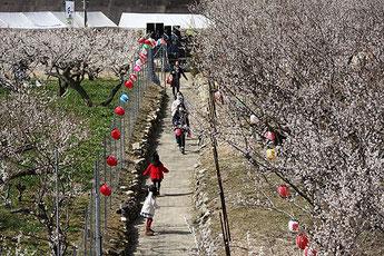 Kobune Plum Festival