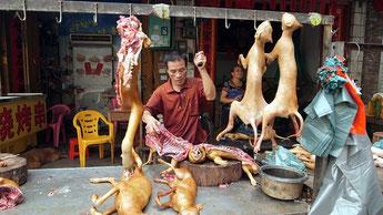 Festival di Yulin, Cina.
