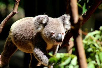 Currumbin Wildlife Park, Goldcoast, Australien