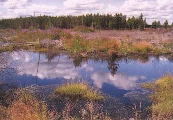Остатки Михайловского озера
