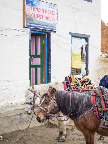 Vor unserer Lodge warteten schon die zwei Pferde