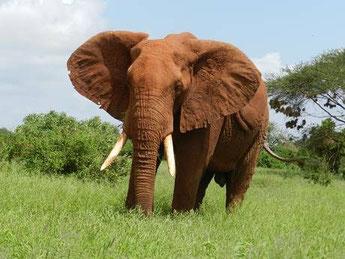 Amboseli Kenia Safari buchen