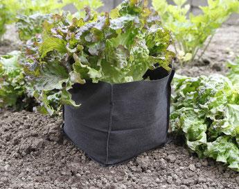 ©Nortene, Bag Biocontrol, sacs de plantations de salade contre les nuisibles