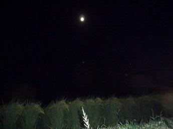 1本の白く光る草がアクセント