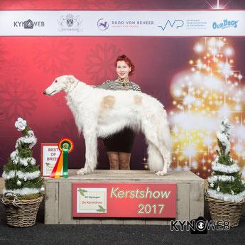 Deutsche Barsoi Zucht von Alshamina Nähe Luxemburg/Schweiz/Belgien..., weisse Barsoi Welpen zur Abgabe bereit..., Barsois für Show und Hundesport!