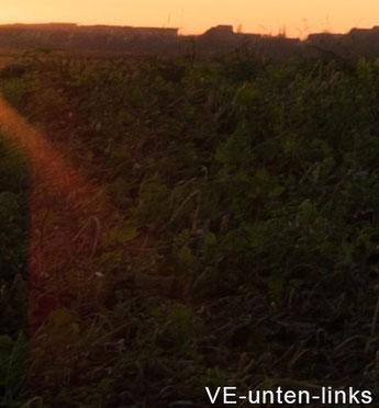 Praxistest: 100% Crop Blende 3,5, Flare links unten: VOIGTLÄNDER 3,5/21mm SKOPAR E auf SONY Alpha 7 s II, www.bonnescape.de