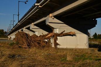 写真4 橋脚に打ち上げられた流木群(大里重人氏撮影)