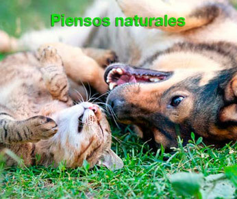 piensos naturales perros gatos
