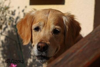 Blue 2014: Sie musste doch mal neugierig nachschauen, was ich da so treibe (Balkonblumen fotografieren....)