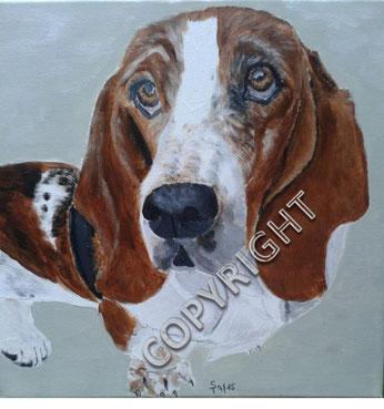 Basset: Kopfporträt des Hundes in Frontalansicht. Der Hund schaut den Betrachter an; sichtbar sind Augen, Nase und Ohren. Fell rotbraun und weiß, Tiermalerei, gemalte Tierportraits nach Fotovorlage, Tiere zeichnen lassen