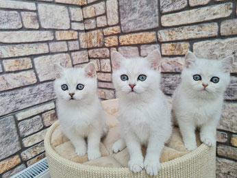 Kasper, Kleo und Kamilla 11 Wochen alt