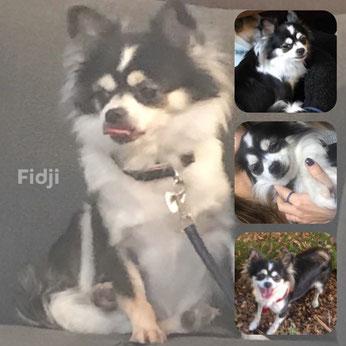 FIDJI adoptée en Décembre 2017