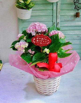 練馬桜台ガーデニングショップ かのはの 新種の八重咲き紫陽花(ミセス シャーロット)をバスケットに入れました