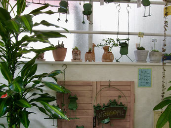 練馬桜台ガーデニングショップ かのはの 当店人気の元気なブリキのカエルくんとアフリカンテイストのゾウ・キリン・ラクダのテラコッタ鉢に愉快な形をした多肉植物ポーチュラカ・峨眉山・セダムヒントニー・サボテンなどを合わせてあります