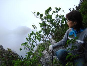 終点の眺望は霧の中、かすかに見えるのは東台先端の臥牛角