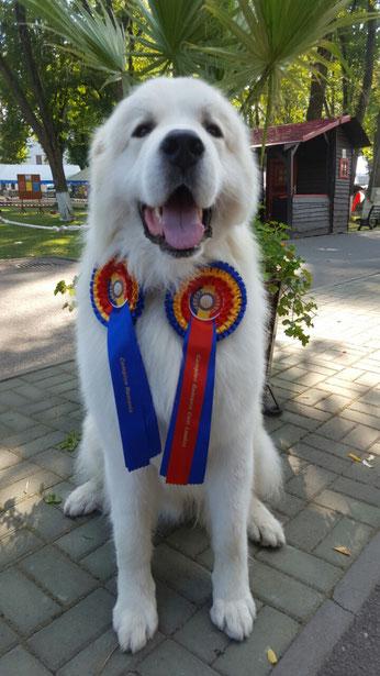Echo de'Chien Cornelius new Romanian Champion