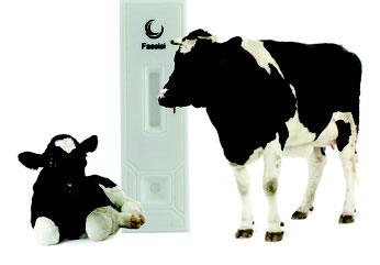 Fassisi BoviPreg Cattles Test