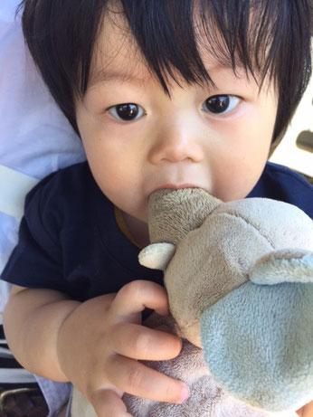 ゾウさんのお鼻かんでまちゅかぁ❤ 超カワイイでちゅね❤ カミかみしながらカメラ目線~!