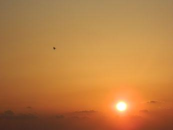 鳥たちも夕日に染まっていきました。