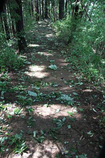 登山道には台風の風雨で落とされた枝が落ちていた