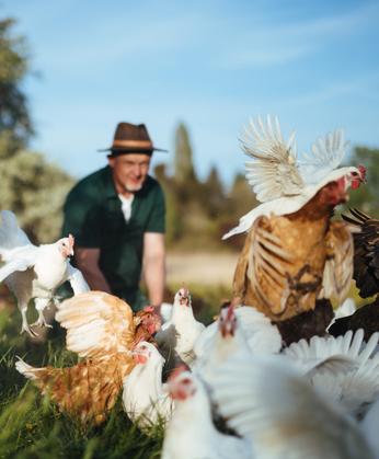 Eier aus Freilandhaltung von glücklichen Hühnern in Konstanz.