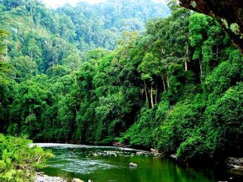 Regnskov i Myanmar
