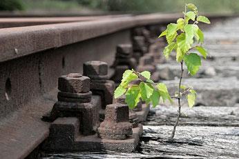 Der biologische Sinn des Lebens: Überleben und Fortpflanzung